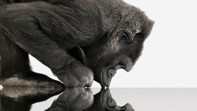 Photo of Pentingnya Gorilla Glass Untuk Layar Ponsel Anda